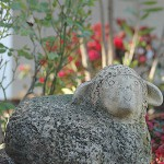 detail-jardin-mas-des-bartavelles-frejus